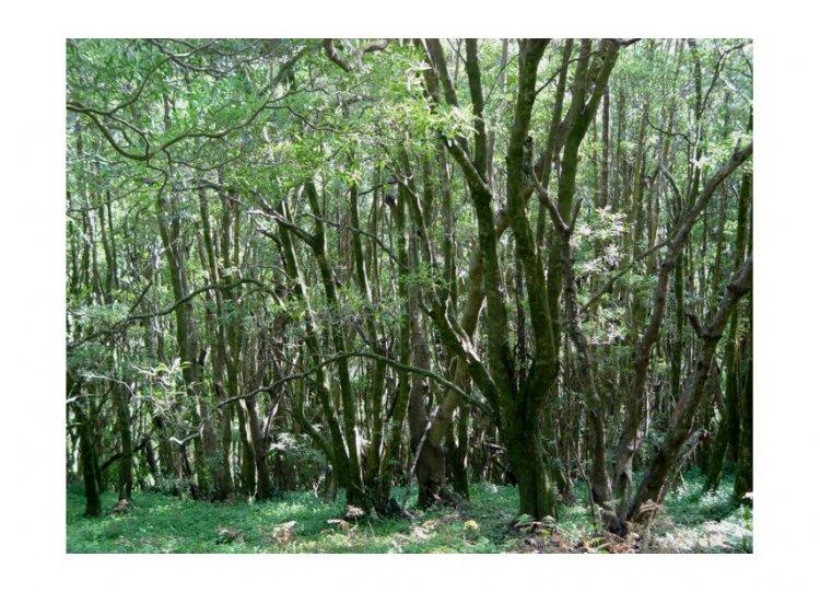 Paisagem Natural/Monte Brasil