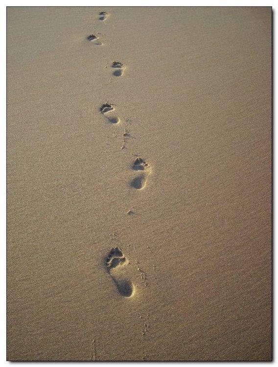 Paisagem Natural/Caminhando pela praia !