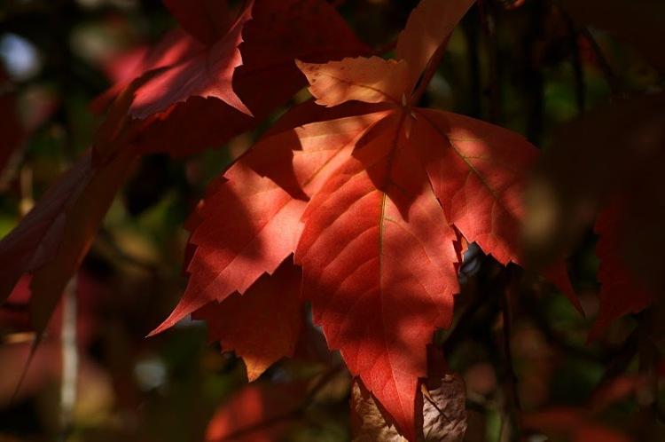 Macro/O Outono