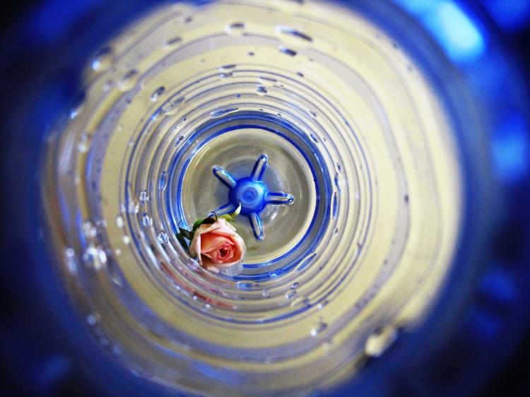 Outros/Rose
