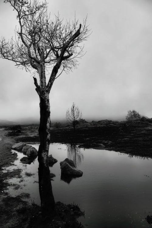 Paisagem Natural/reflexos de almas nuas