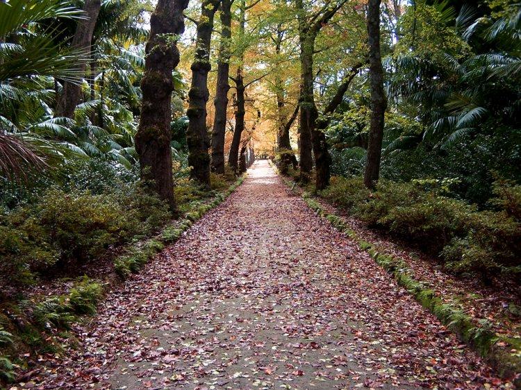 Paisagem Natural/Caminhos do Outono...