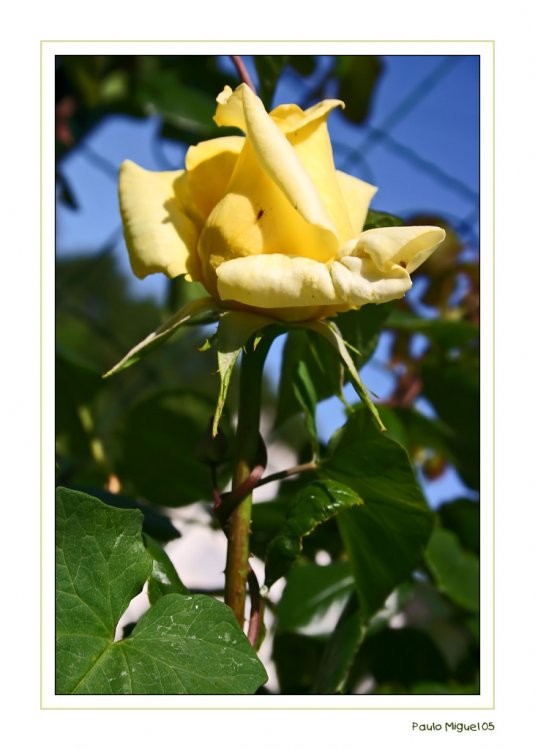 Outros/Flor de mel