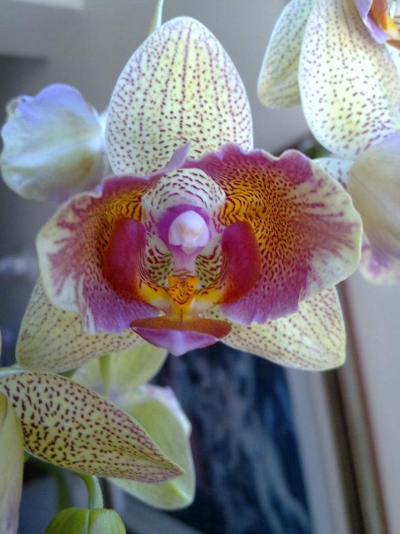 Outros/flores exóticas