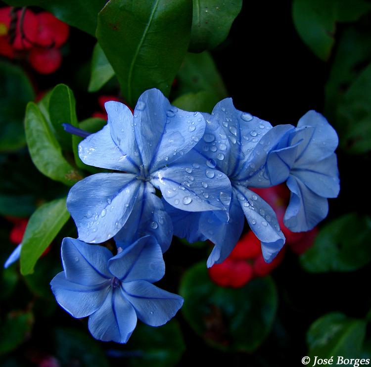 Macro/Blue beauty...
