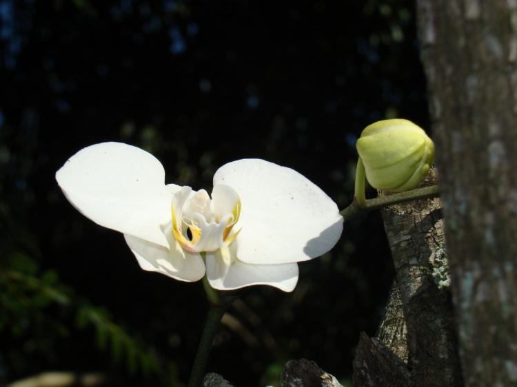 Outros/Orquídea...