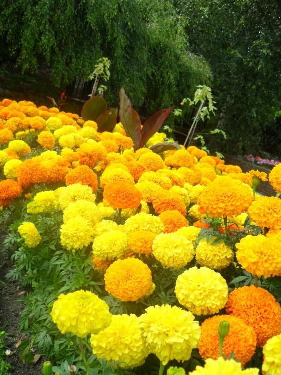 Suficiente Flores amarelas e laranjas Foto de Júlia Schmidt | Olhares  TG09