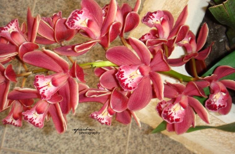 Outros/orquídea2