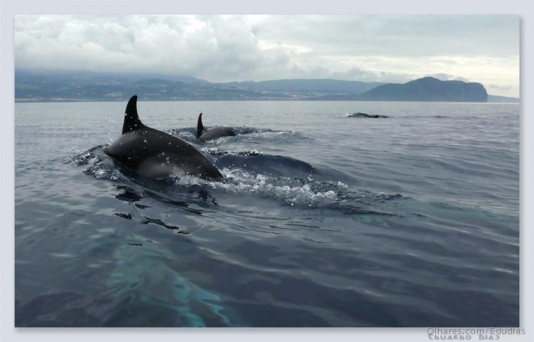 Animais/Golfinhos a Sul