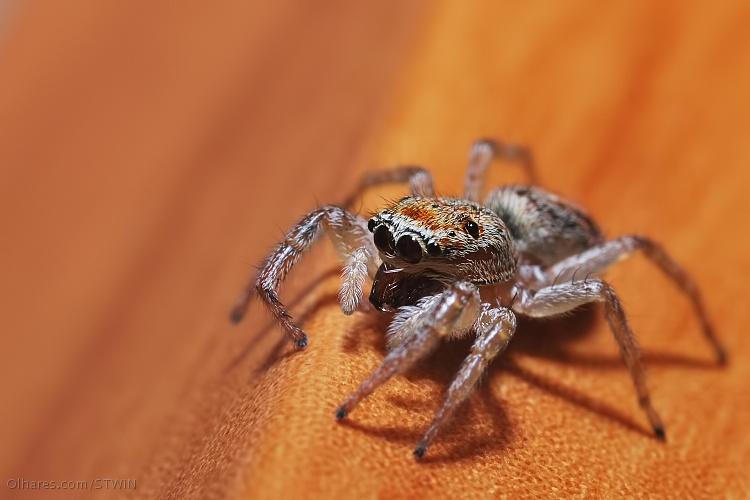 Macro/Spider