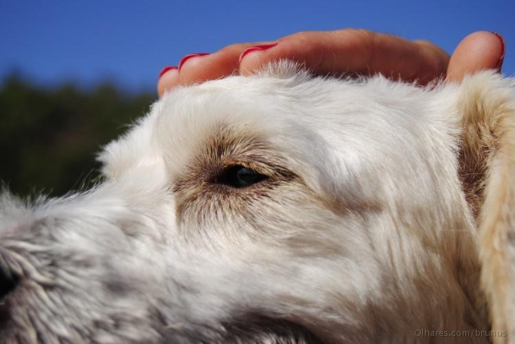 Animais/Doggy