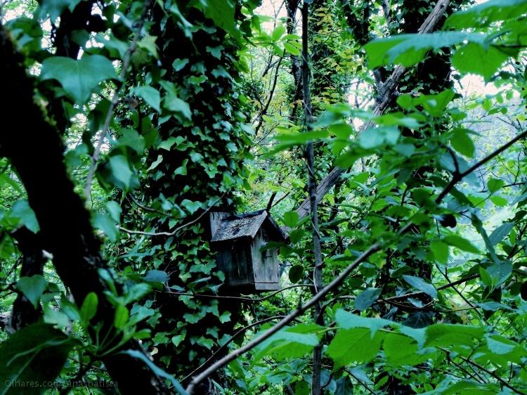 Paisagem Natural/Uma casinha na árvore...
