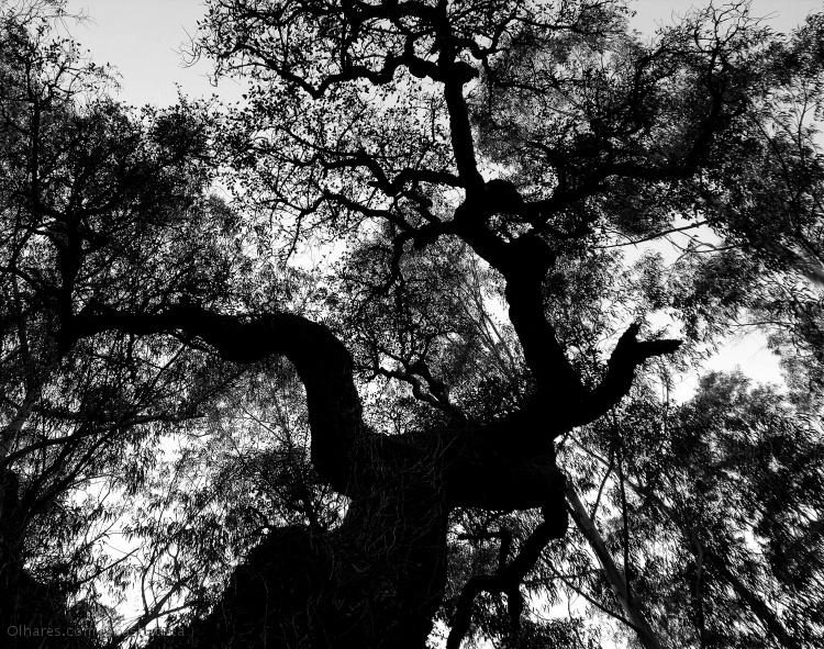 Paisagem Natural/De braços erguidos para o céu...