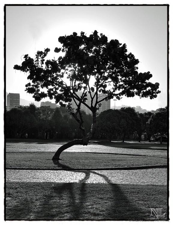 Paisagem Natural/Árvore da vida