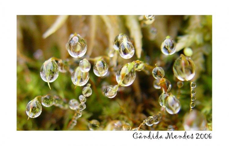 Macro/Drops