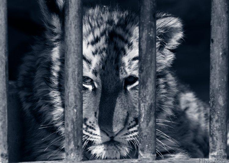 Animais/Olhares tristes...