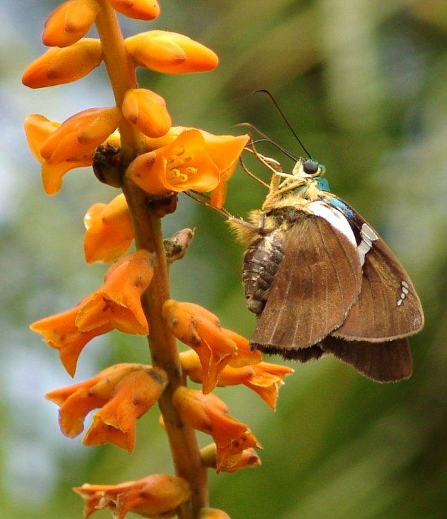 Macro/flor e borboleta 5