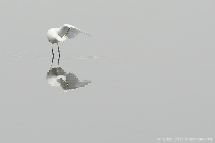 Animais/Espelho meu...