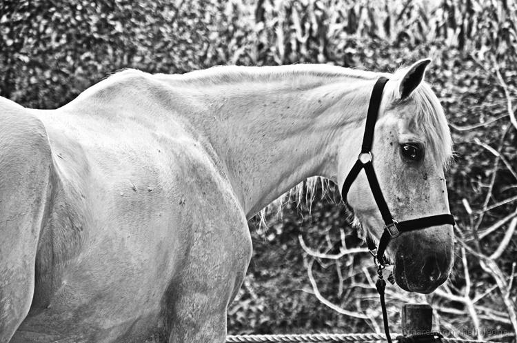 Animais/White Horse