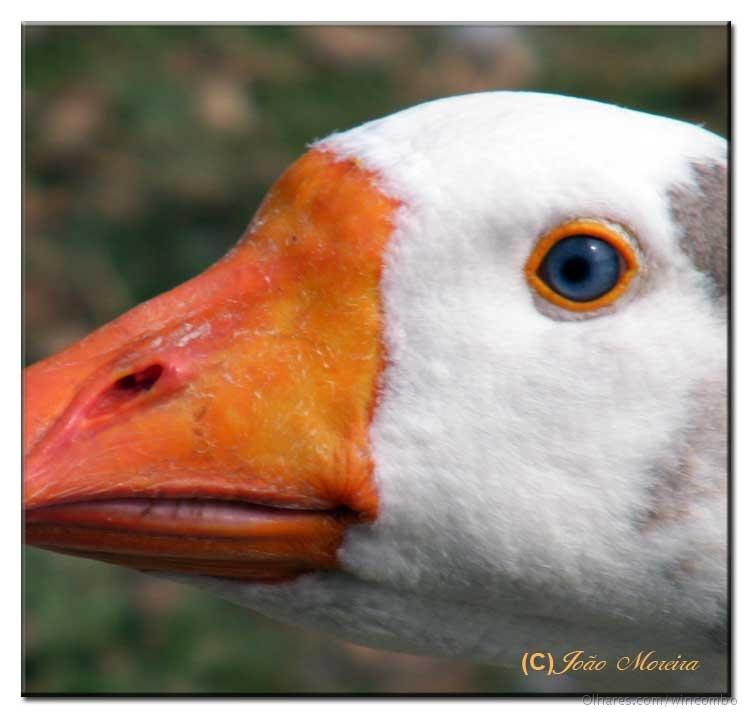 Animais/Um olhar