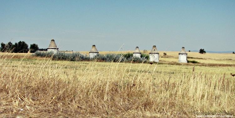 Paisagem Natural/Género de moinhos em Portel (évora)