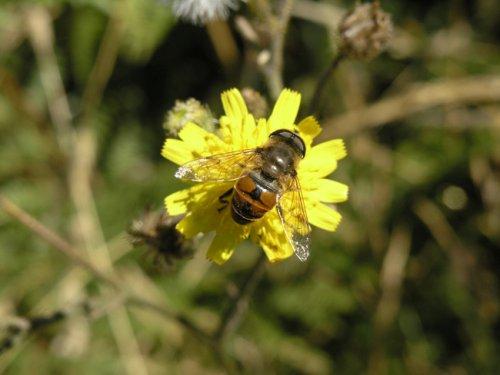 Macro/uma pequena flor