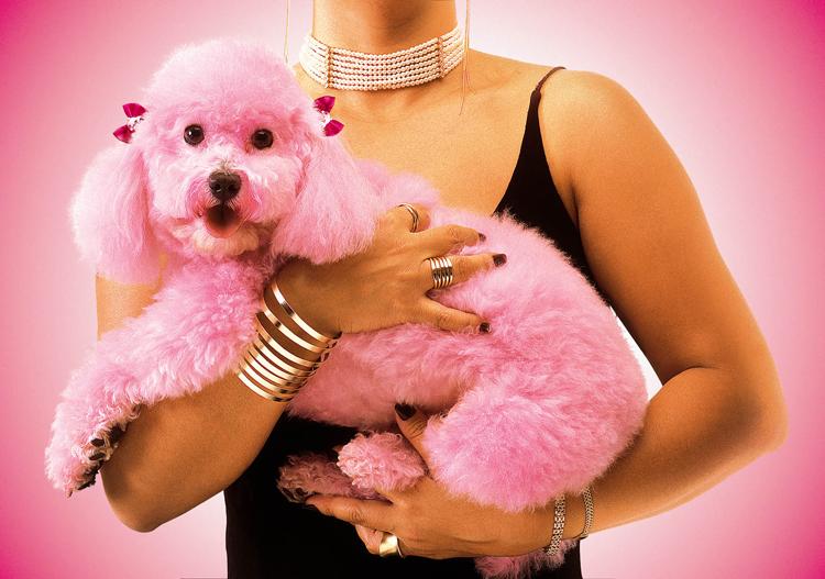 Animais/Pink