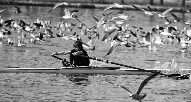Desporto e Ação/Remando contra....as gaivotas...