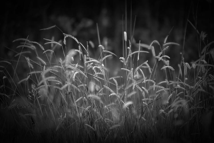 Paisagem Natural/Simplicidade de ser