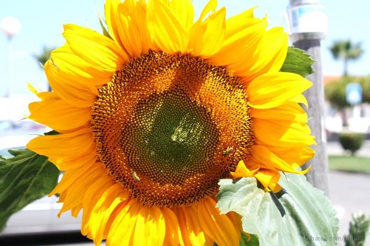 Outros/abelhas