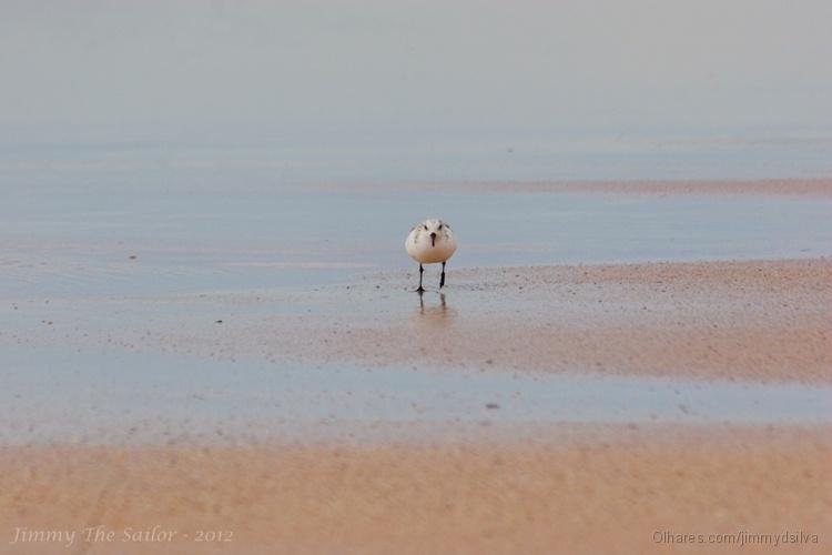Animais/Rola do Mar