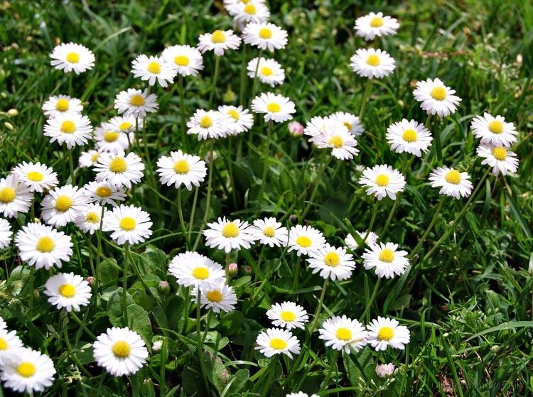 Paisagem Natural/Para florir a semanita
