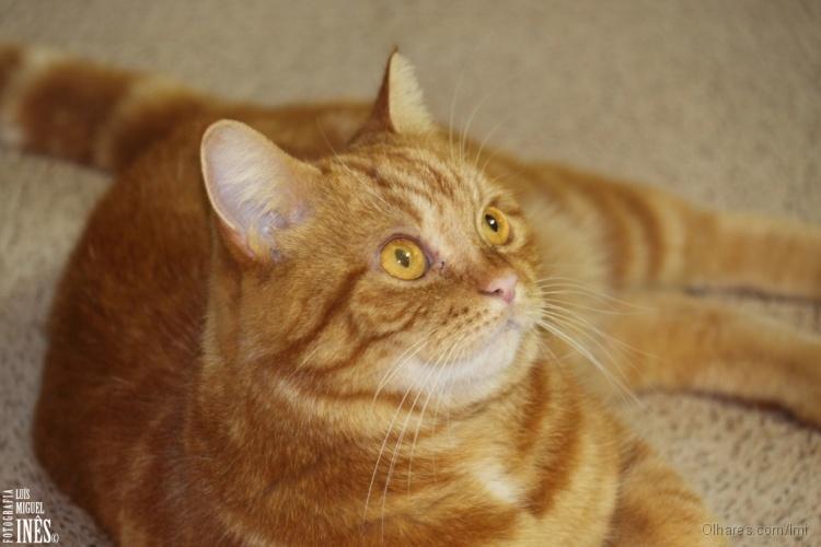Animais/O Rodas...um gato especial!