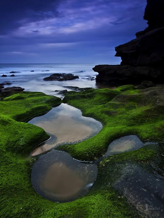Paisagem Natural/... Verdes são os...