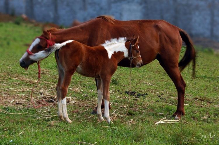 Animais/Carinho de mãe