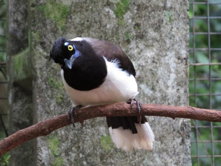 Animais/Pássaro Cancão