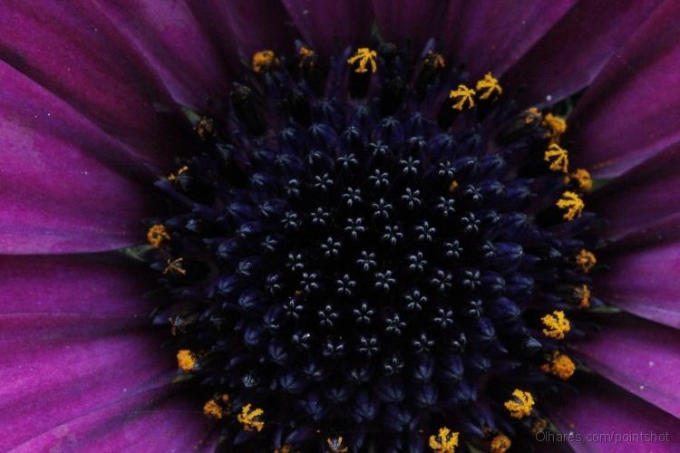 Outros/Macro flor