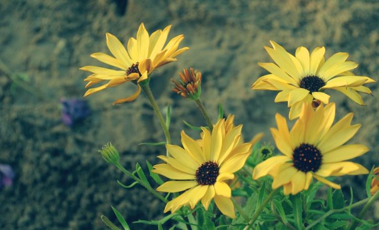 Outros/Flores de rua.