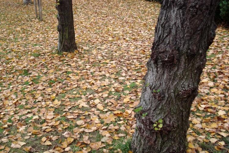 Paisagem Natural/O outono é assim