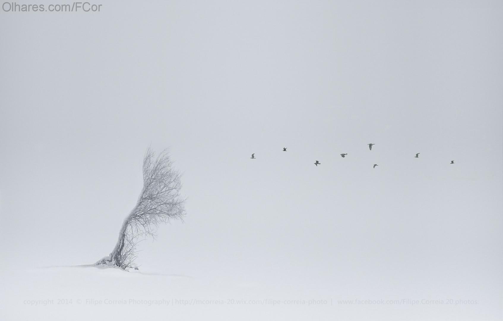 Paisagem Natural/Poema