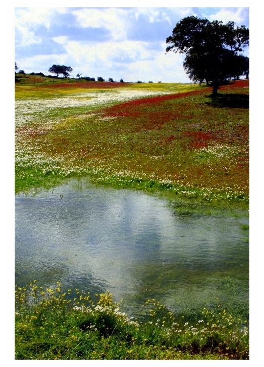 Paisagem Natural/Vestida de flores e céu
