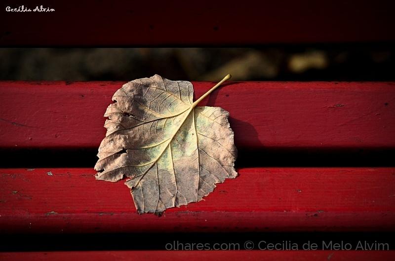 Paisagem Natural/O vermelho do Outono