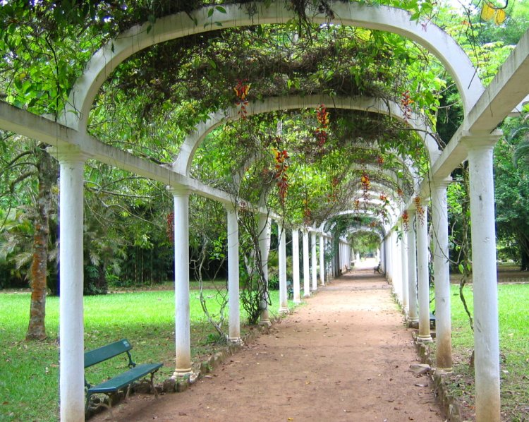 Jardim Botanico Do Rio De Janeiro Foto De Francisco Guimaraes   ~ Festa Jardim Botanico Rio De Janeiro