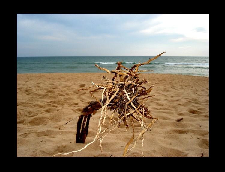 Paisagem Natural/Guardião das Areias