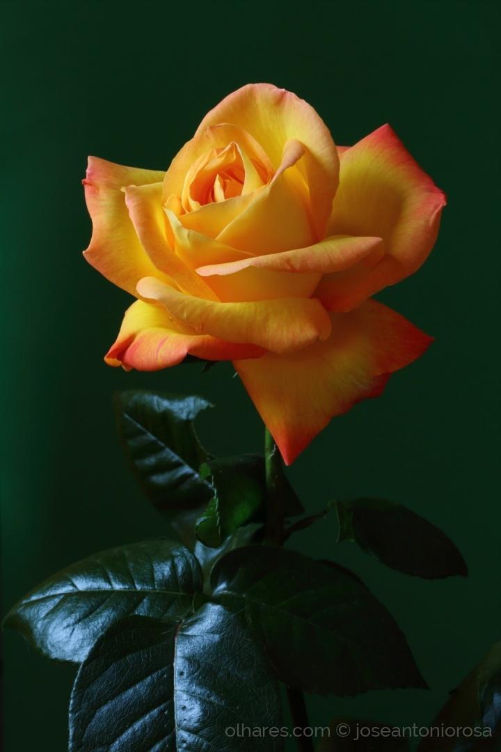 Outros/Às Rosas do Olhares.