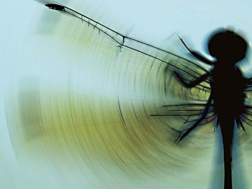 Arte Digital/Uma libélula que caiu no meu photoshop