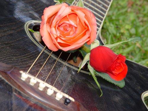 Abstrato/Violão e rosas