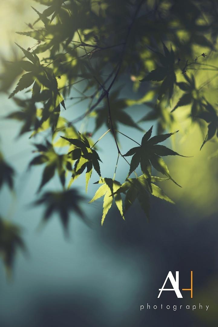 Paisagem Natural/Silencio e a folha