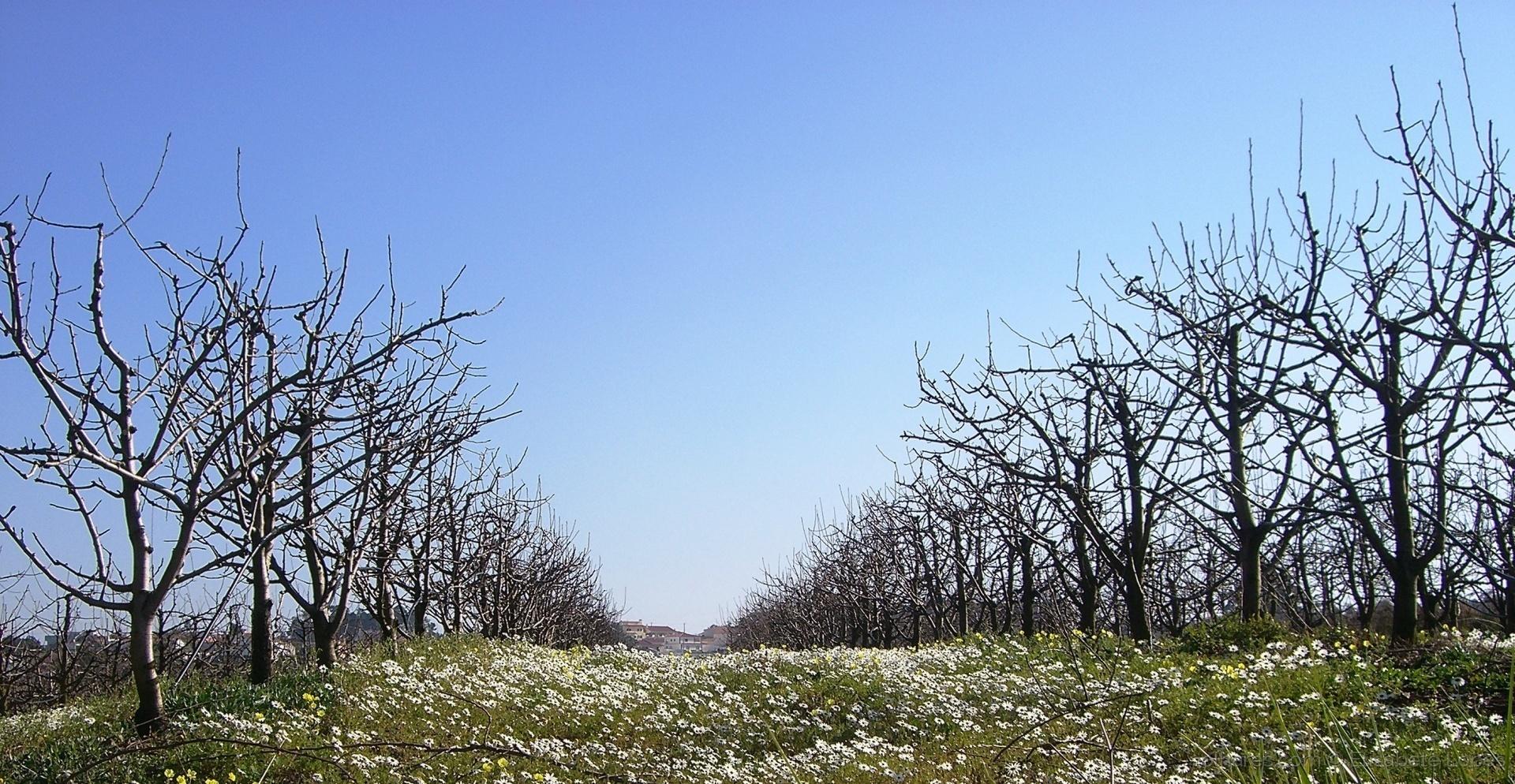 Paisagem Natural/A estrada das flores...