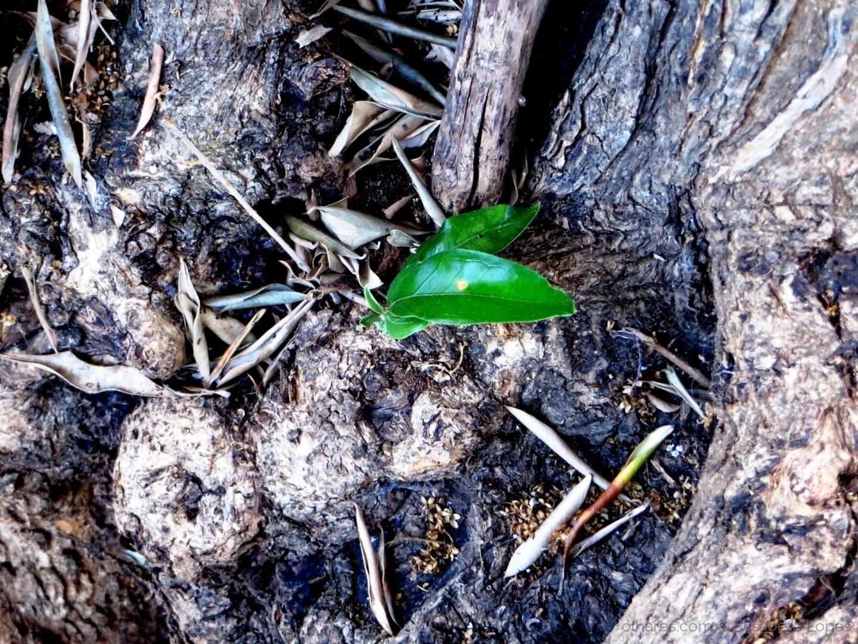 Paisagem Natural/A Fénix verde